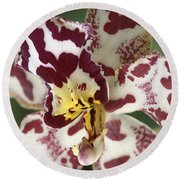 Orchid 32 Round Beach Towel