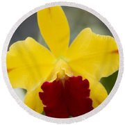 Orchid Beauty - Cattleya - Pot Little Toshie Mini Flares Mericlone Hawaii Round Beach Towel by Sharon Mau