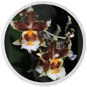 Orchid Brown Yellow White Macro Round Beach Towel