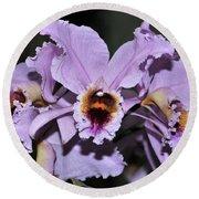 Orchid Cattleya Percivaliana Christmas Cattleya Round Beach Towel
