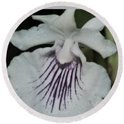 Orchid Cochleanthes Aromatica  Menehune Round Beach Towel