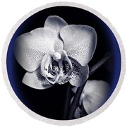Orchid Elegance 2 Round Beach Towel