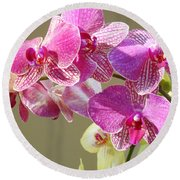 Orchid Flowers Art Prints Pink Orchids Round Beach Towel