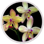 Orchid In Blossom Round Beach Towel