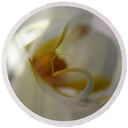 Orchid In Light  Round Beach Towel