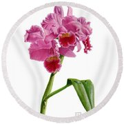 Orchid - Lc. Culminant La Tuilerie Round Beach Towel