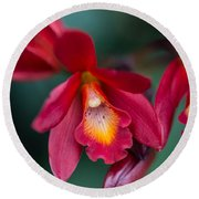 Orchid Love Round Beach Towel