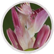 Orchid Mantis Round Beach Towel