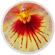 Orchid Of Color Round Beach Towel
