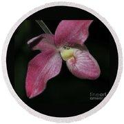 Orchid Phragmipedium Hanna Popow 2 Of 2 Round Beach Towel