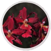 Orchid Red Burrageara Living Fire  Glowing Ember Round Beach Towel