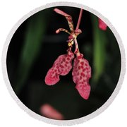 Orchid Red Renanthera Unnamed Round Beach Towel