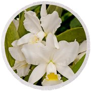 Orchid Sophronitis Round Beach Towel