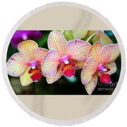 Orchid Trio Round Beach Towel