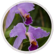 Orchids Pictures 1 Round Beach Towel