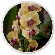 Orchids Pictures 10 Round Beach Towel