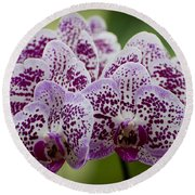 Orchids Pictures 11 Round Beach Towel