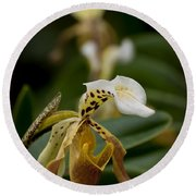 Orchids Pictures 28 Round Beach Towel