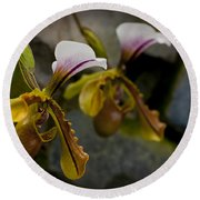 Orchids Pictures 30 Round Beach Towel