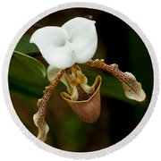 Orchids Pictures 31 Round Beach Towel