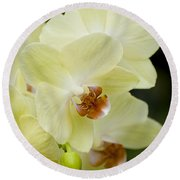 Orchids Pictures 34 Round Beach Towel