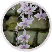 Orchids Pictures 47 Round Beach Towel