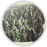 Oregon Willow Catkins Round Beach Towel