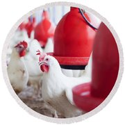 Organic Chicken Coop  Round Beach Towel