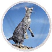 Oriental Cat Round Beach Towel