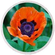 Oriental Poppy Flower Round Beach Towel