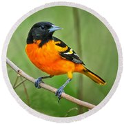 Oriole Perched Round Beach Towel