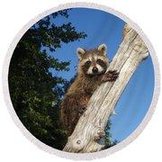 Orphaned Raccoon Round Beach Towel