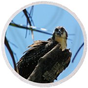 Osprey 1 Round Beach Towel