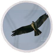 Osprey Above The Androscoggin Round Beach Towel