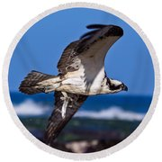 Osprey Bringing Home The Bacon Round Beach Towel