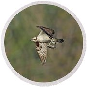 Osprey Carrying Small Fish Round Beach Towel