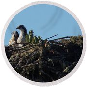 Osprey Chicks In Nest Round Beach Towel