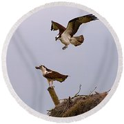 Osprey Coming In Round Beach Towel