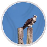 Osprey Giving Warning Round Beach Towel