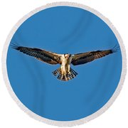 Osprey Hovering Round Beach Towel