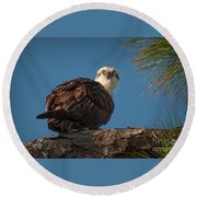 Osprey In Pine 3 Round Beach Towel