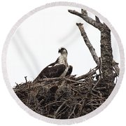 Osprey On A Nest In The Everglades Round Beach Towel