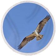 Osprey Pandion Haliaetus In Flight Round Beach Towel