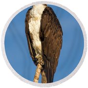 Osprey Perched In Yellowstone National Park Round Beach Towel