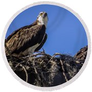 Ospreys In The Nest Round Beach Towel