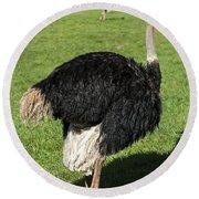 Ostrich 1 Round Beach Towel