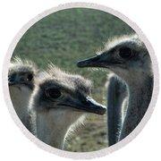 Ostrich Round-up Round Beach Towel