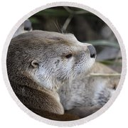 Otter And Family Round Beach Towel