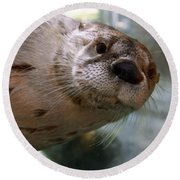 Otter Be Lookin' At You Kid Round Beach Towel