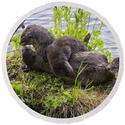 Otter Family Fun Round Beach Towel